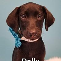 Adopt A Pet :: Polly - SOUTHINGTON, CT