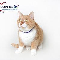 Adopt A Pet :: Annie - Alexandria, VA