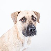 Adopt A Pet :: Zoro - Decatur, GA