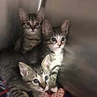 Adopt A Pet :: Fayette - Beckley, WV