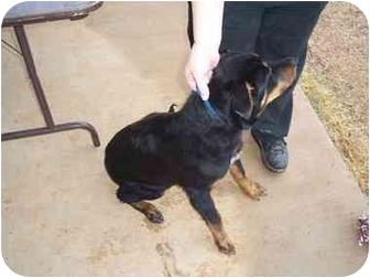 Rottweiler Mix Dog for adoption in Tishomingo, Oklahoma - Sylanna