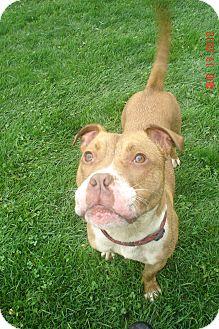 Terrier (Unknown Type, Medium) Mix Dog for adoption in Lake Odessa, Michigan - Monte