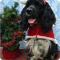 Adopt A Pet :: Buddy O - Sugarland, TX