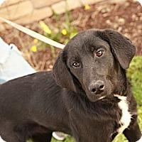 Adopt A Pet :: Jethro - Lancaster, OH