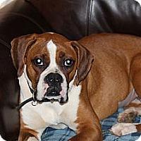 Adopt A Pet :: CoCo - Arden, NC