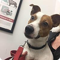Adopt A Pet :: Pilgrim - Rhinebeck, NY