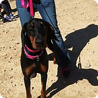 Adopt A Pet :: Lulu - killeen, TX