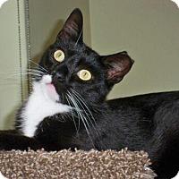 Adopt A Pet :: Sibi - Brooklyn, NY