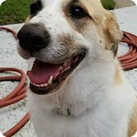 Adopt A Pet :: Anna now Annie - Kyle, TX