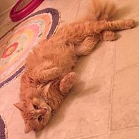 Adopt A Pet :: Chaucer - Smyrna, GA