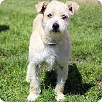 Adopt A Pet :: Rico - Waco, TX