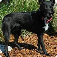 Adopt A Pet :: Calie - Columbus, NE
