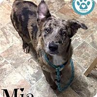 Adopt A Pet :: Mia - Kimberton, PA