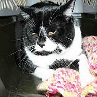 Adopt A Pet :: GARY - Aurora, IL