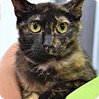 Adopt A Pet :: Gia - Michigan City, IN