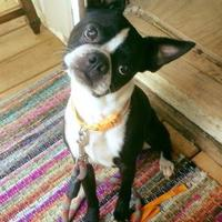 Adopt A Pet :: Available EDGERTON - Greensboro, NC
