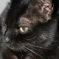 Adopt A Pet :: Lily - Richmond, VA
