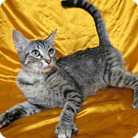 Adopt A Pet :: Fiona - St. Louis, MO