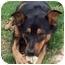 Photo 1 - Shepherd (Unknown Type)/Shepherd (Unknown Type) Mix Dog for adoption in Chapel Hill, North Carolina - Sabrina