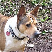 Adopt A Pet :: Cicily - Salem, OR