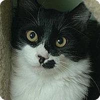 Adopt A Pet :: Bartells - Auburn, CA