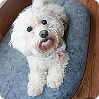Adopt A Pet :: Kaya - Hastings, NY
