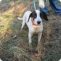 Adopt A Pet :: Star - Dundas, VA
