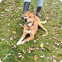 Adopt A Pet :: #458-13 @ Animal Shelter - Zanesville, OH