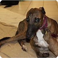 Adopt A Pet :: Newton - Philadelphia, PA