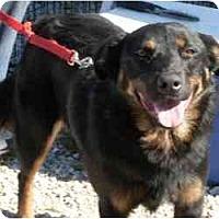 Adopt A Pet :: Scoobie - Harrisburg, PA