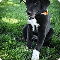 Adopt A Pet :: Fremont - Broomfield, CO