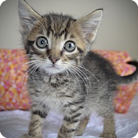 Adopt A Pet :: Joey - Xenia, OH