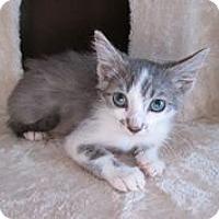 Adopt A Pet :: Frost - San Bernardino, CA