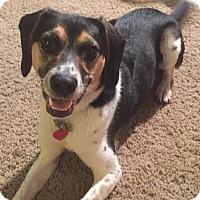 Adopt A Pet :: Winslow - Minneapolis, MN