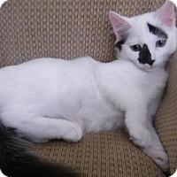 Adopt A Pet :: Cleo - Orlando, FL