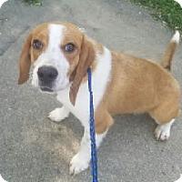 Adopt A Pet :: Henry - Avon, NY