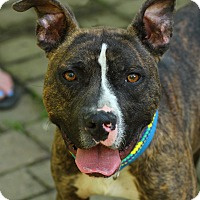 Adopt A Pet :: Sherman - Lafayette, IN