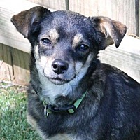 Adopt A Pet :: Pistachio - Memphis, TN