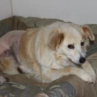 Adopt A Pet :: Skype - Athabasca, AB