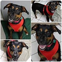 Adopt A Pet :: Cami - Forked River, NJ