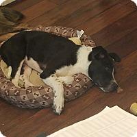 Adopt A Pet :: Hermes - Homewood, AL