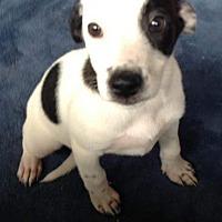 Adopt A Pet :: JOY - Portsmouth, NH