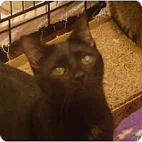 Adopt A Pet :: Inky - Muncie, IN