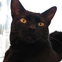 Adopt A Pet :: Justin - Santa Monica, CA