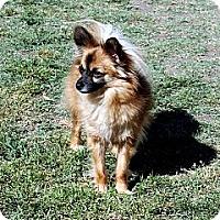 Adopt A Pet :: Zeek - Lodi, CA