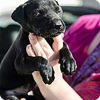 Adopt A Pet :: Kirby - Cumming, GA
