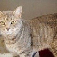 Adopt A Pet :: Patriot - Marietta, GA