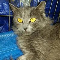 Adopt A Pet :: Arlo - Glendale, AZ