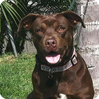 Labrador Retriever Mix Dog for adoption in Lucasville, Ohio - Daisy