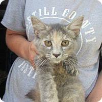 Adopt A Pet :: Delaney - Fairborn, OH